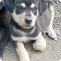 Adopt A Pet :: *Zooey - PENDING - Westport, CT