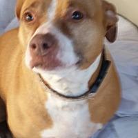 Adopt A Pet :: AUDREY - Gustine, CA