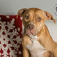 Adopt A Pet :: Sienna - Inglewood, CA