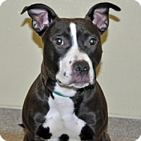 Adopt A Pet :: Pablo - Port Washington, NY