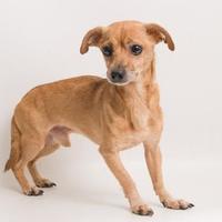 Adopt A Pet :: Auggie - Santa Cruz, CA