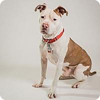 Adopt A Pet :: Ranaan (CL) - Columbia, SC