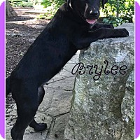 Adopt A Pet :: Brylee - Elburn, IL