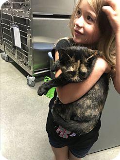 Adopt A Pet :: Moana  - Henderson, NC