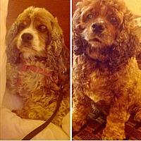 Adopt A Pet :: Sky & Mia - Flushing, NY