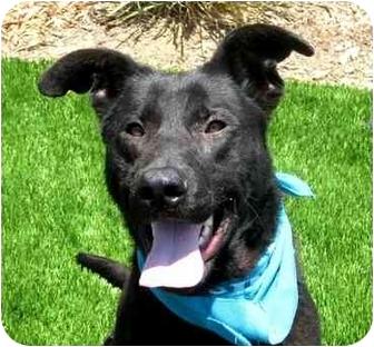Labrador Retriever Mix Dog for adoption in San Diego, California - Onyx