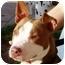 Photo 2 - American Pit Bull Terrier Mix Dog for adoption in Berkeley, California - Lulu