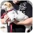 Photo 4 - Beagle/Dachshund Mix Dog for adoption in Duluth, Georgia - Trixie