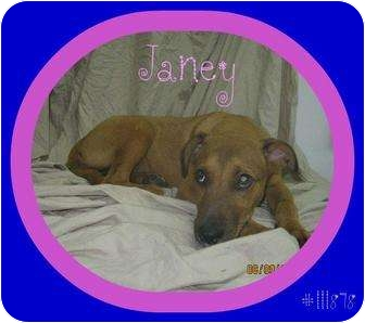 Shepherd (Unknown Type) Mix Puppy for adoption in staten Island, New York - Janey