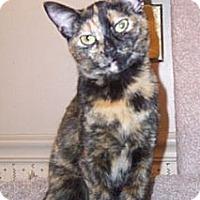 Adopt A Pet :: Paisley - Gray, TN