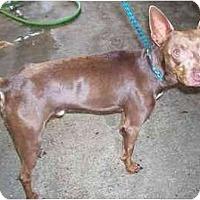Adopt A Pet :: Coco - Houma, LA