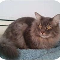 Adopt A Pet :: Ceasar - Anchorage, AK