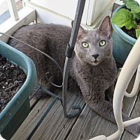 Adopt A Pet :: T-Bird - Gaithersburg, MD