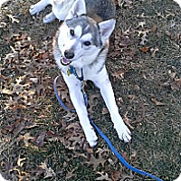 Adopt A Pet :: India - Horsham, PA