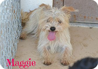 Shih Tzu Mix Dog for adoption in Laplace, Louisiana - Maggie