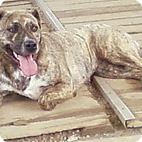 Adopt A Pet :: Jade - Toledo, OH