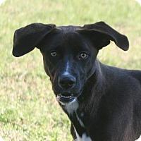 Adopt A Pet :: Reba - Lufkin, TX