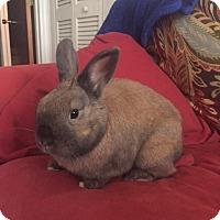 Adopt A Pet :: Carlos - Williston, FL