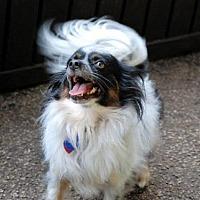 Adopt A Pet :: Ba'cho (in GA) - Marietta, GA
