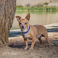 Adopt A Pet :: Natalie - Capistrano Beach, CA
