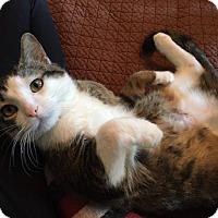 Adopt A Pet :: Zipper - Chicago, IL