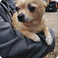 Adopt A Pet :: Lovey - Crump, TN
