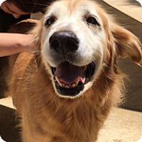 Adopt A Pet :: Bea - New Canaan, CT