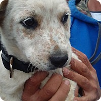 Adopt A Pet :: Libby - Kendall, NY