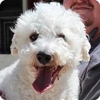 Adopt A Pet :: Archie - La Costa, CA