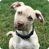 Adopt A Pet :: Maria - CUMMING, GA