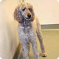 Adopt A Pet :: Sierra Rouge - Wildomar, CA