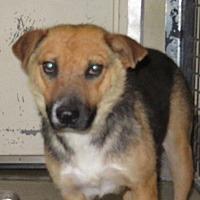 Adopt A Pet :: Venus - Park City, UT