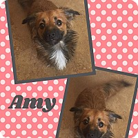 Adopt A Pet :: Amy - Scottsdale, AZ