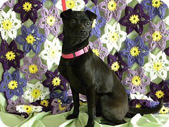 Miniature Pinscher/Pug Mix Dog for adoption in Princeton, Kentucky - Grace