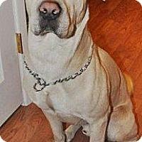 Adopt A Pet :: Kino - Gilbert, AZ