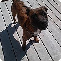 Adopt A Pet :: Dale Staller - Southampton, PA