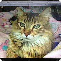 Adopt A Pet :: Sasha - Monroe, GA