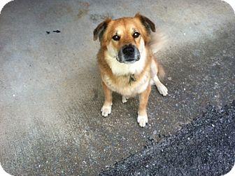 German Shepherd Dog Mix Dog for adoption in Hot Springs, Virginia - Ringo