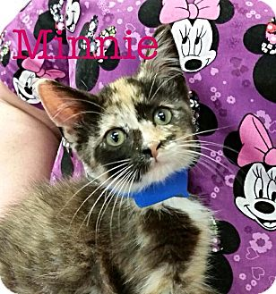 Domestic Longhair Kitten for adoption in Williamston, North Carolina - Minnie