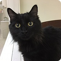 Adopt A Pet :: Sebastian - Medina, OH
