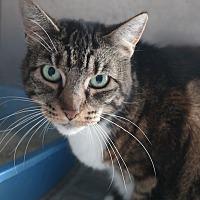 Adopt A Pet :: WENDY - San Pablo, CA