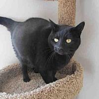 Adopt A Pet :: CICI - Fairfield, CA