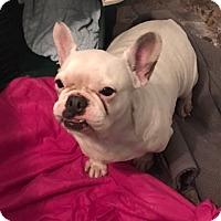 Adopt A Pet :: Marley Rose - Columbus, OH