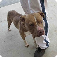 Adopt A Pet :: Rocky - Newnan City, GA