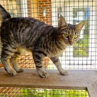 Adopt A Pet :: Shelby - Chestertown, MD