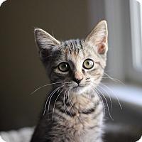 Adopt A Pet :: Harley - Richmond, VA