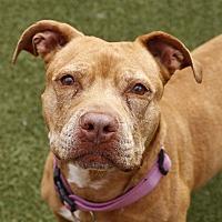 Adopt A Pet :: Zoe - Oceanside, CA