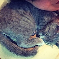 Adopt A Pet :: Stella - Virginia Beach, VA
