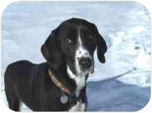 Hound (Unknown Type) Mix Dog for adoption in Ste-Agathe des Monts, Quebec - Raven