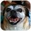 Photo 2 - Pug Mix Dog for adoption in Calgary, Alberta - Chloe (2)